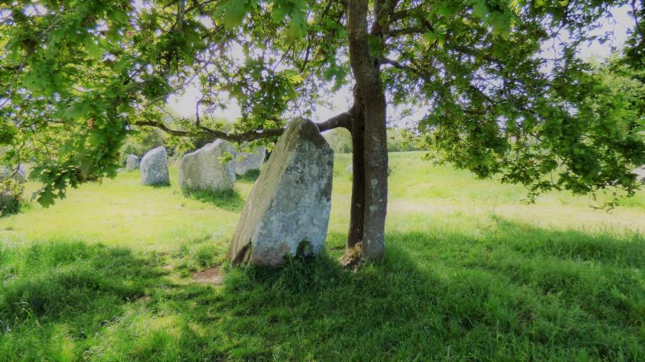 Menhirs à Erdeven –Morbihan